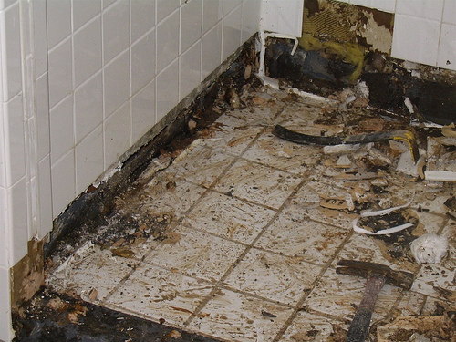 bathroom mold removal products. Bathroom Mold Removal Products