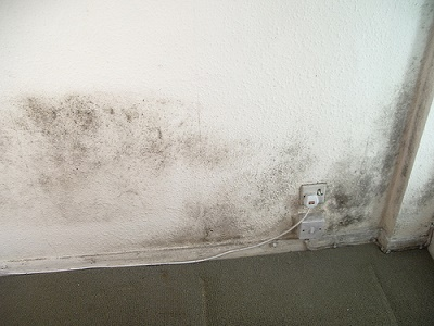 mold removal mississauga