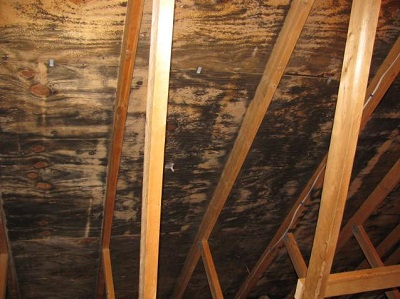Understanding attic mold and how should you deal with it - How to deal with mold ...